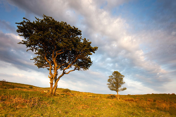 Two Trees<br /> <br /> A simple scene - but one which moves me. Julie did this as a night-time scene!